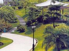 呼伦贝尔市园林绿化用米径6公分千头椿批发报价
